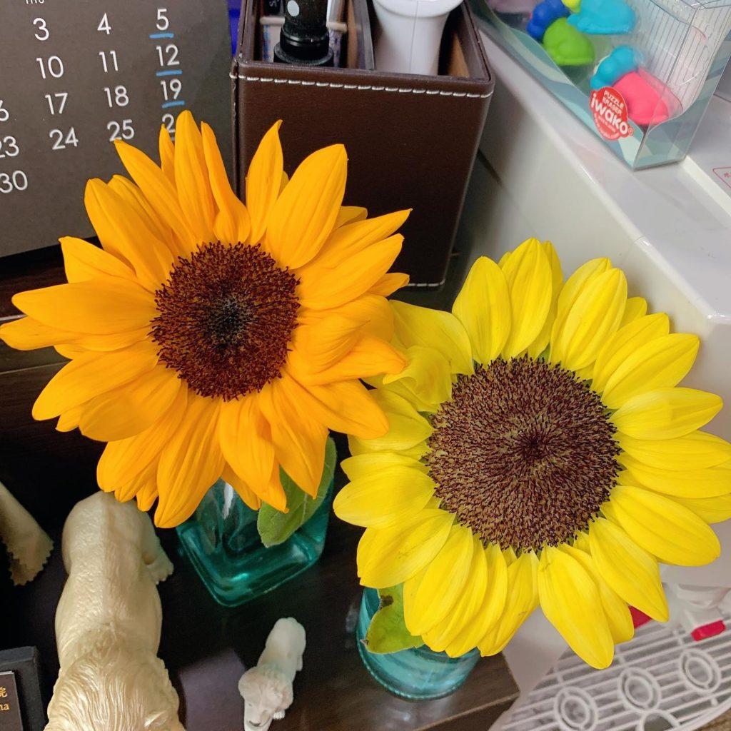 綺麗な花を